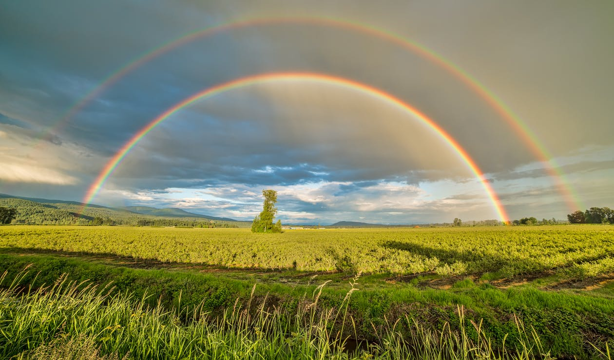 Crop Field Under Rainbow and Cloudy Skies at Daytime