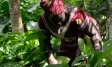 Empowering women for more sustainable cocoa communities | Ipsos